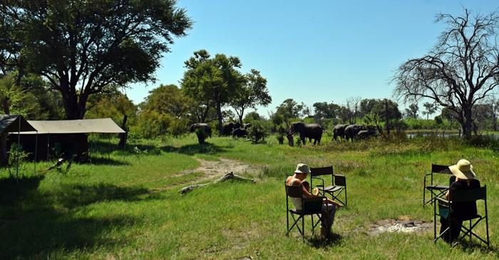 Elephants at Matswere camp Cheryl review
