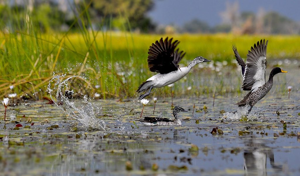 Okavango boating and bird viewing
