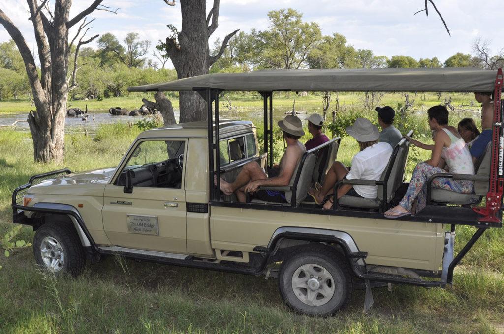 Elephants Bathing Cheryl review