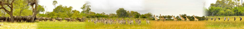 Okavango landscapes