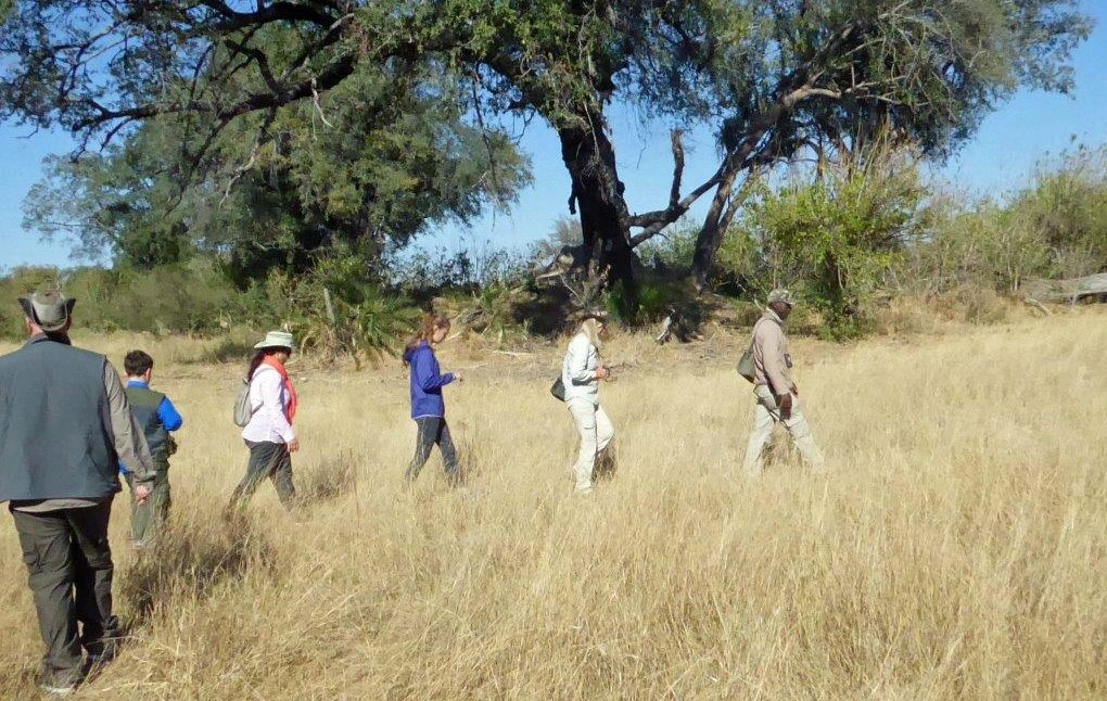 Okavango Island game walk